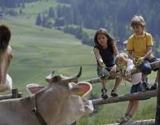 Familienhotels Südtirol: Neues Programm der Naturdetektive 2014
