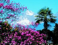 Familienhotels Südtirol: Den Frühling in den Bergen erleben